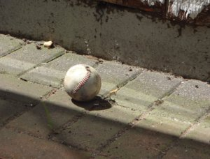 道に落ちている野球ボール